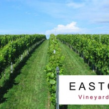 English Vineyard Tour and Tasting for Two